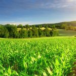 As the Prices of wheat, corn and barley keep increasing- Buy/Invest in Agricultural or Farm Land in Canada